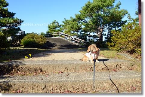 うだつ山2013秋 087