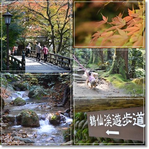 山中温泉2013 5-1