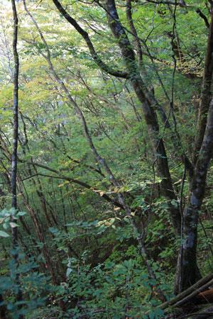 1011安部奥の森