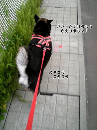 110609_181705_M.jpg