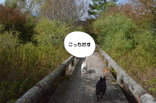 DSC_1326.jpg