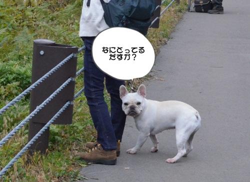 DSC_1461.jpg
