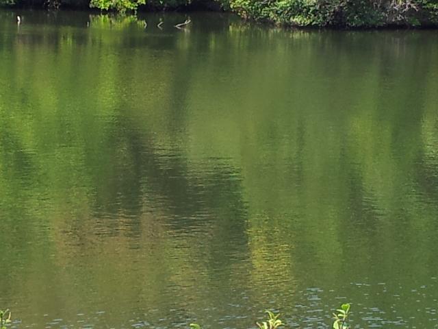 S地区の池の一つ