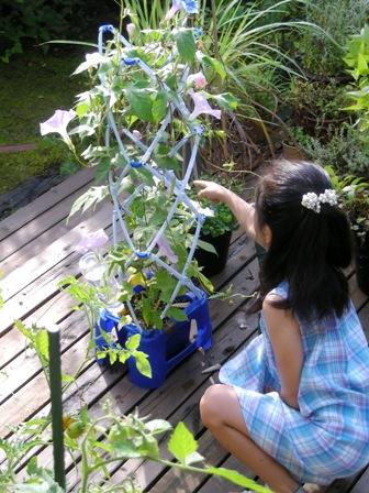 my-garden 020 (2)