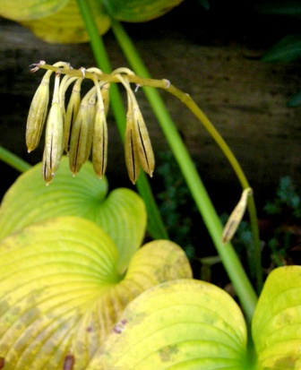 my-garden 030