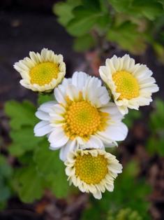 my-garden 023 (4)