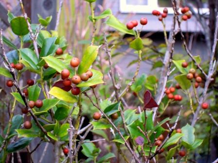 my-garden 017