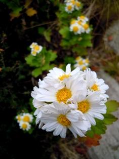 my-garden 050 (2)