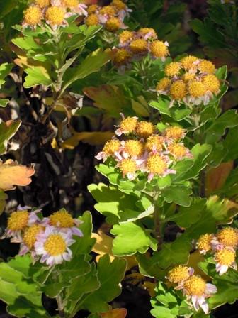 my-garden 011 (3)