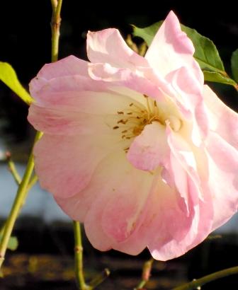 my-garden 042 (3)