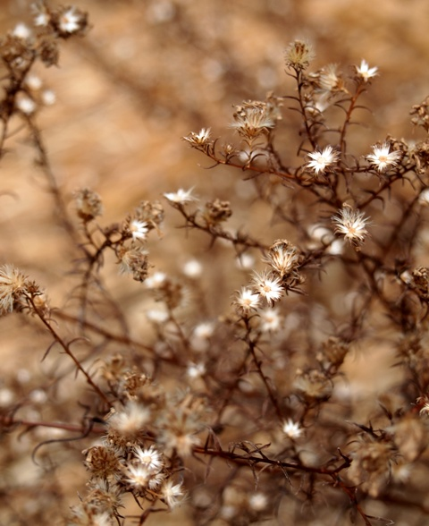 my-garden 025