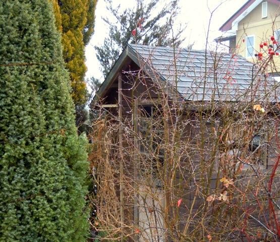 my-garden 029 (6)