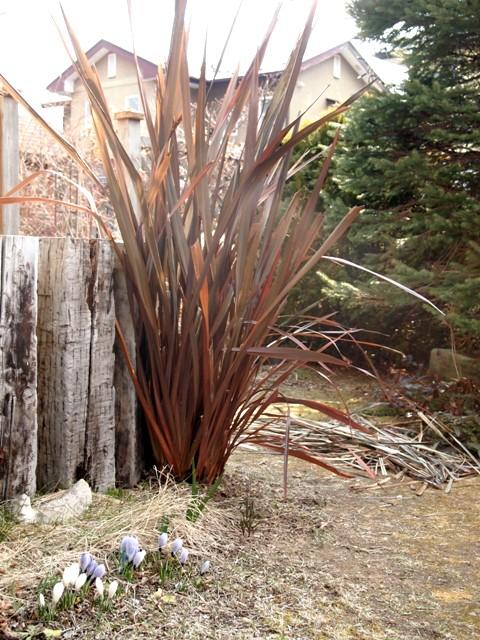 my-garden 003