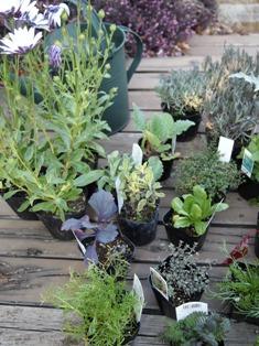 my-garden 111