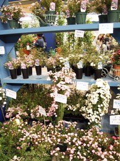 my-garden 302