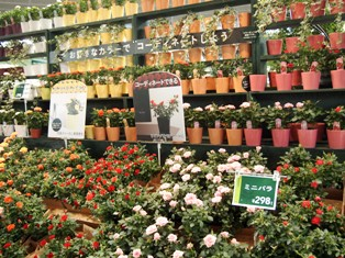 my-garden 307