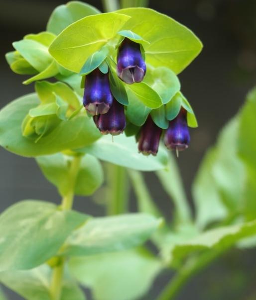 my-garden 043 (4)