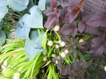 my-garden 077