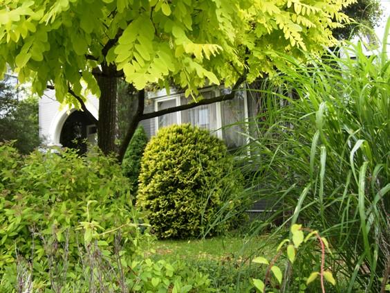 my-garden 013 (2)