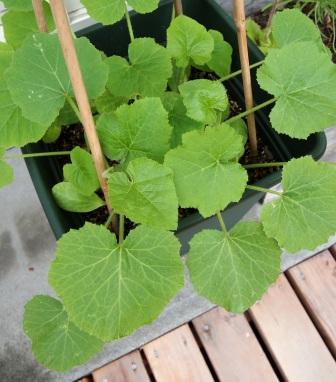 my-garden 034 (2)