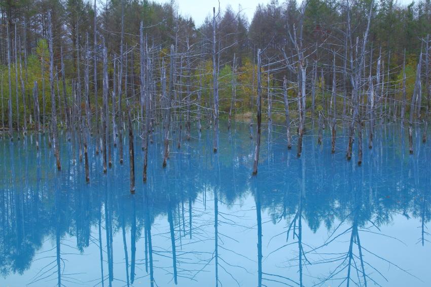 141013-青い池069