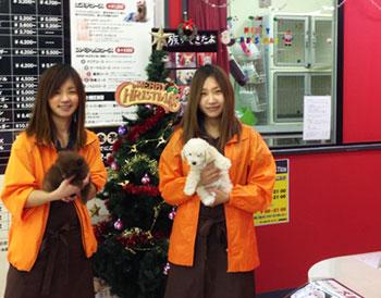 staff20131129-1.jpg