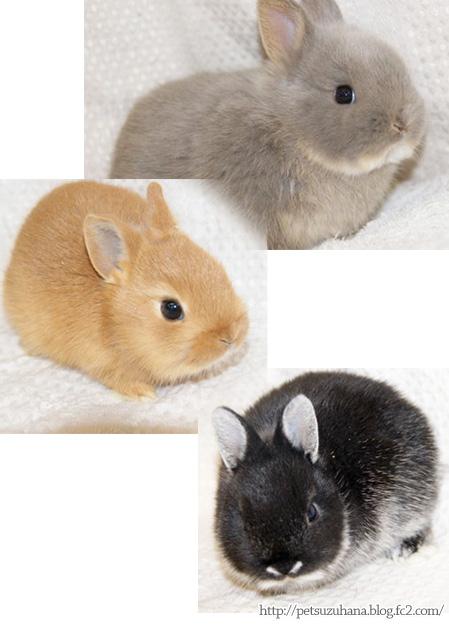 ウサギは毛色が変わる?