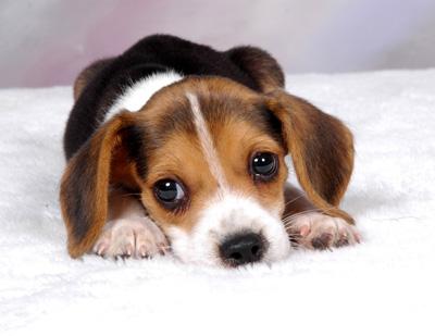 犬の風邪?他の病気?
