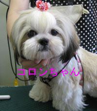 2010-07-24_2479コロンちゃん