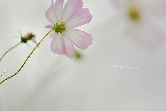 20121011-DSC_0631.jpg