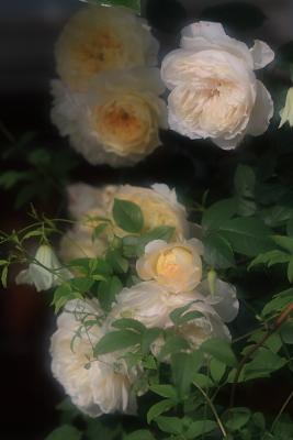 garden3011