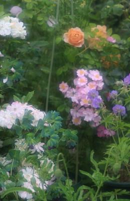 garden3013