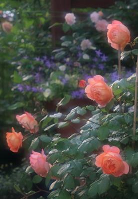 garden3015