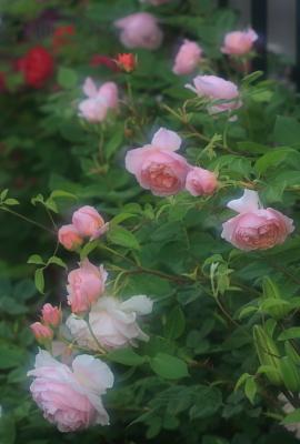 garden3016