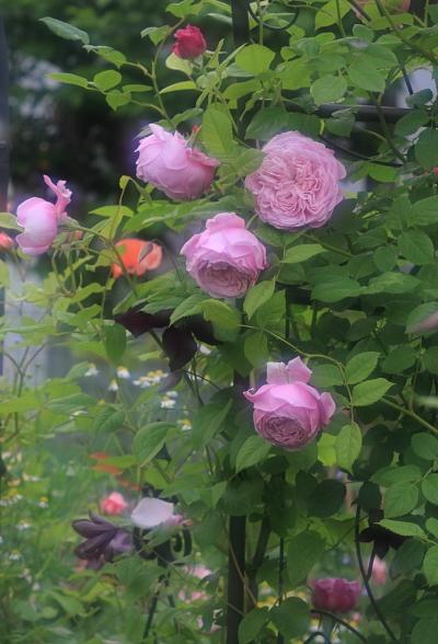 garden3022