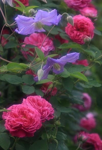 garden3023
