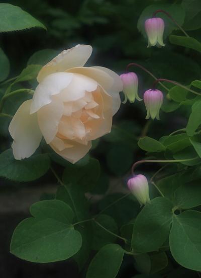 garden3026