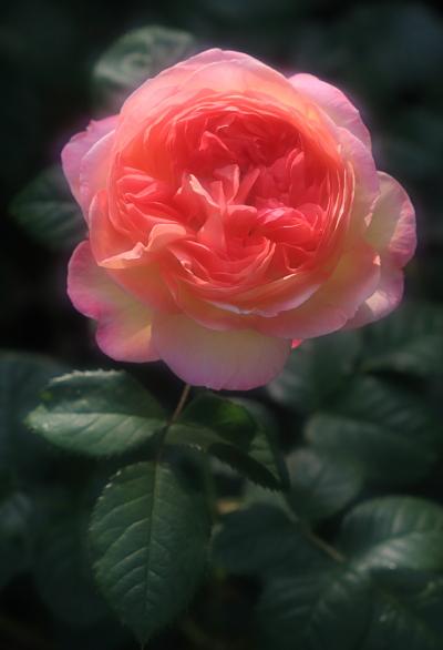 garden3028