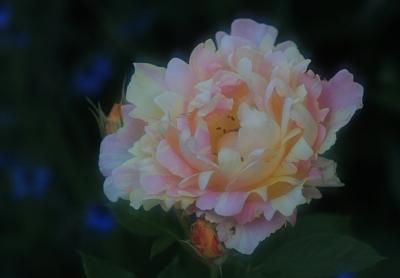 garden3029