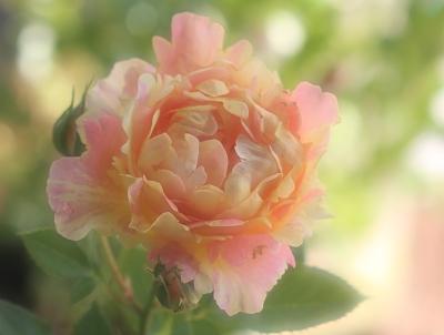 garden3034