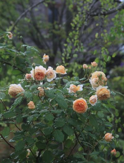 karuizawa3017