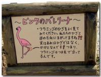 ピンクのバレリーナ-1-