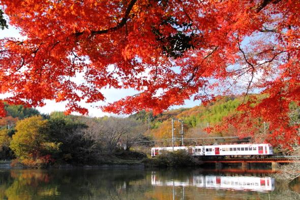 2013/12/7 和歌山電鐵貴志川線 大池遊園