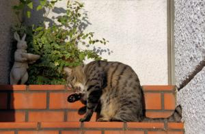 外猫キジトラ