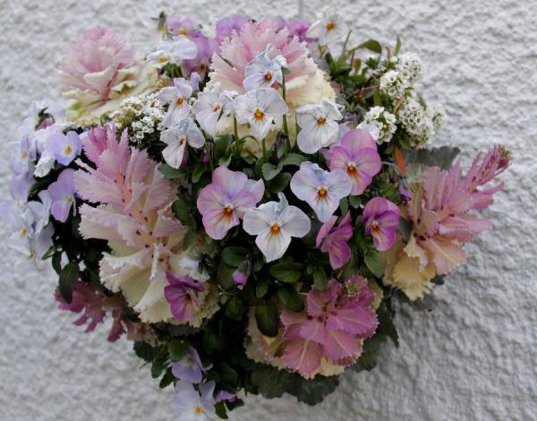 IMG_10543月の花