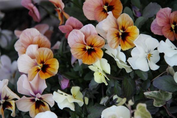 IMG_10493月の花