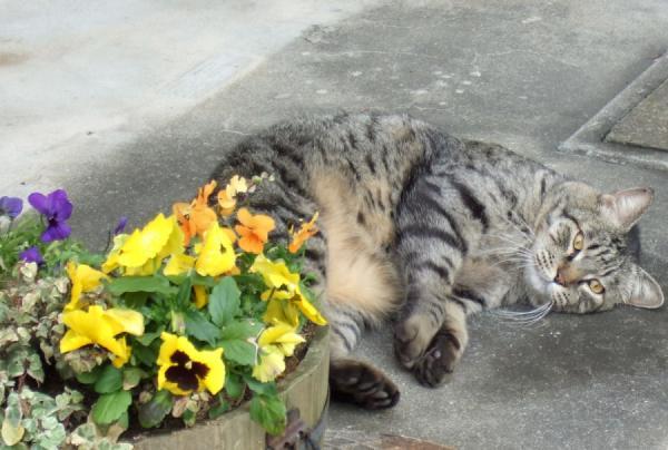 ツシマと花e