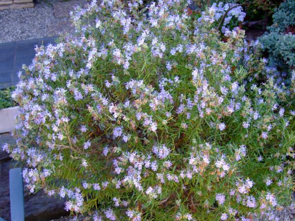 20090411花