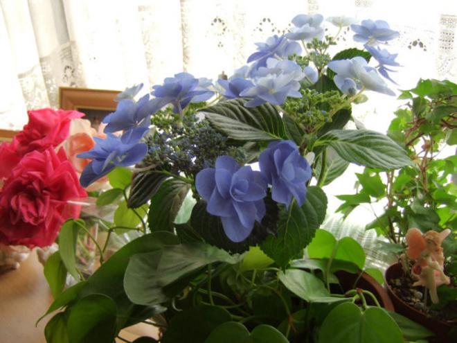 出窓の花s