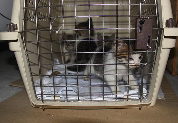 IMG_2604子猫4
